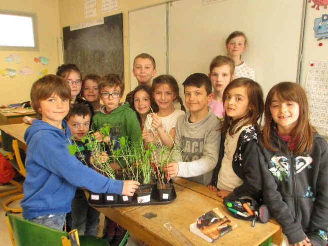 Les plantations dans la classe de CE