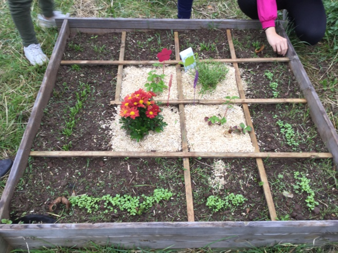 Un jardin potager au collège